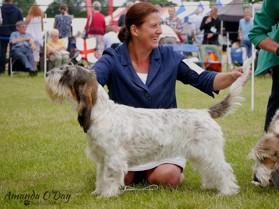 Windsor Ch Show 2017
